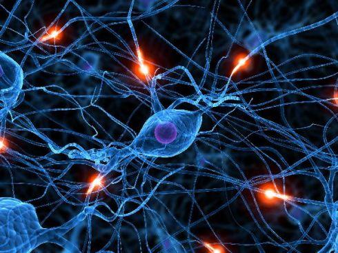 redes sinapticas