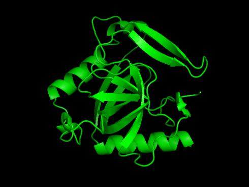 Pirofosfatasa inorgánica. Una de las proteínas analizadas en el estudio. | Imagen: Wikimedia Commons